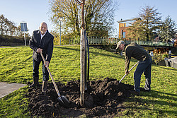 Wethouder Snijders plant boom